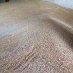 Купувачите на хлебна пшеница на борсата снижиха офертите с 10 лева за тон