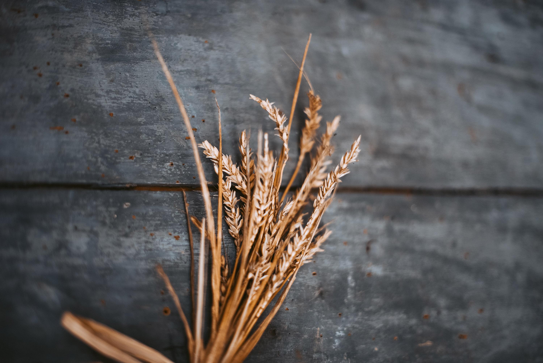 5,7 млн. тона пшеница очакват от софийската борса