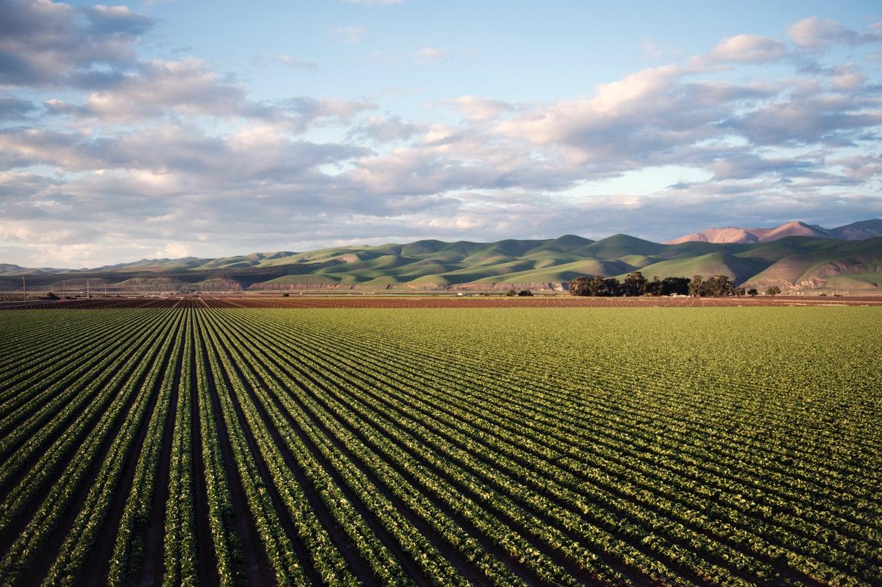 Как се развива пазарът на биопродукти в ЕС