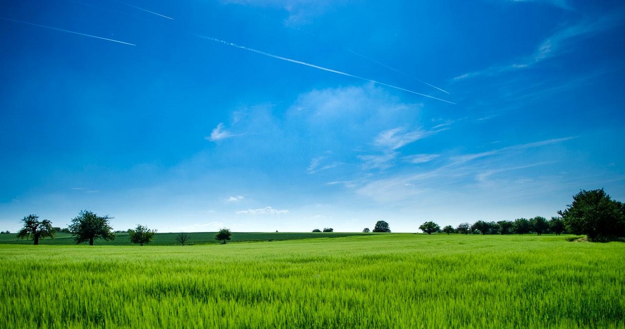 Променят изискване за био пасищата по мярка 11