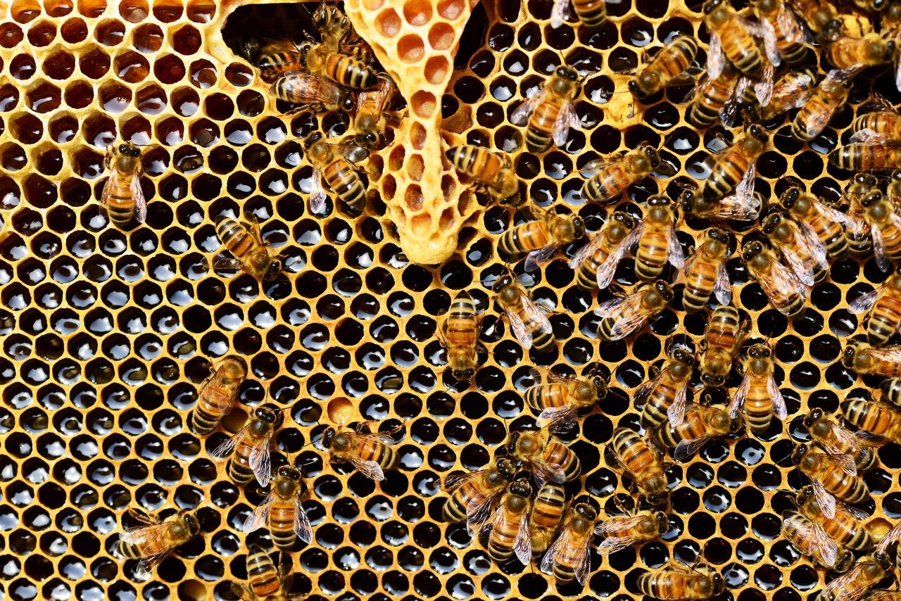 Електрокомпания създаде първия соларен парк за отглеждане на пчели