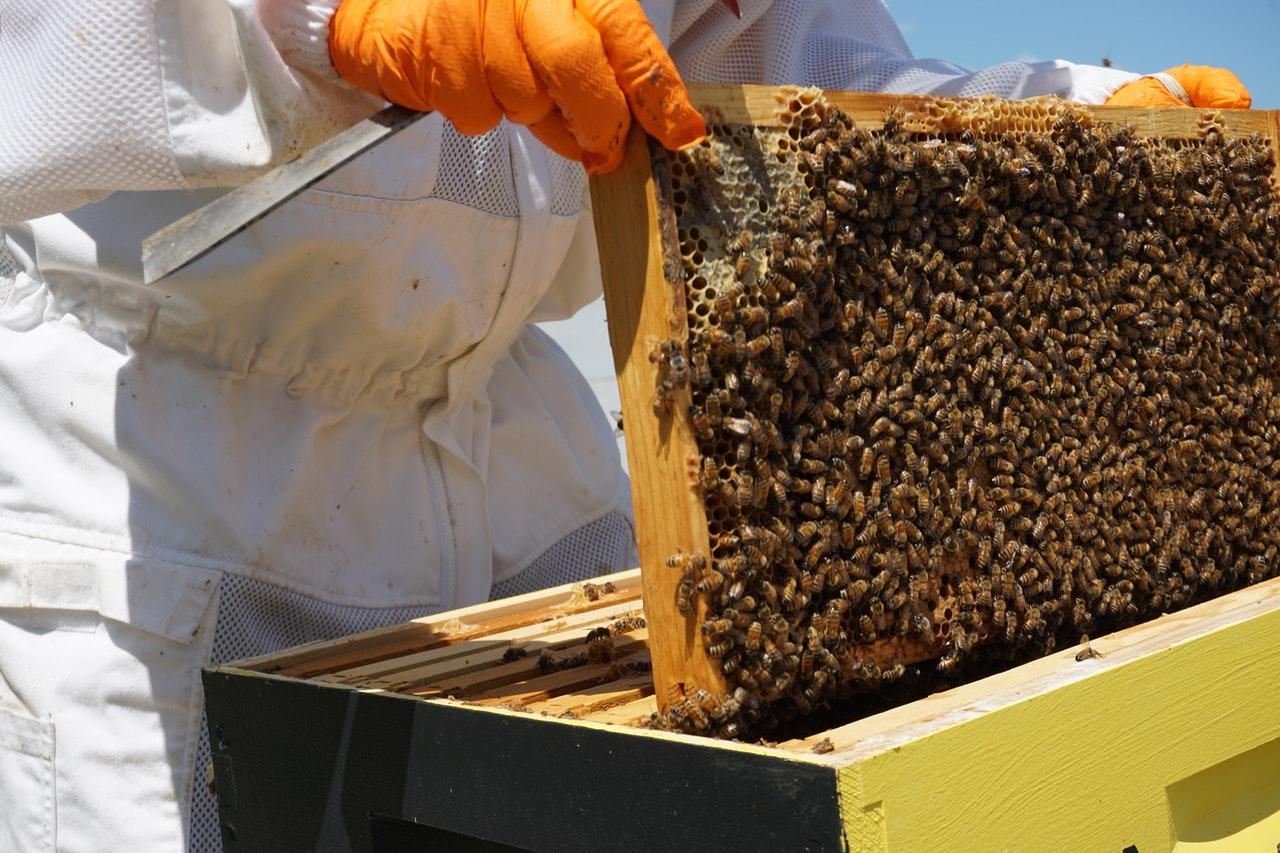 Цената на меда – невиждано ниска от 18 години според опитни пчелари